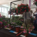LH Fuschia flower show